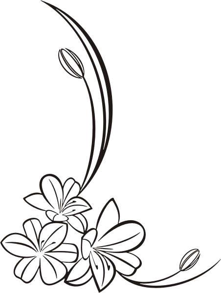 Frangipani Flower Drawing F250 Frangipani Flower