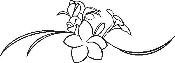 Frangipani Flower Drawing F351 Frangipani Flower